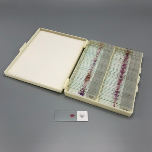 Prepared human histology slide set of 100