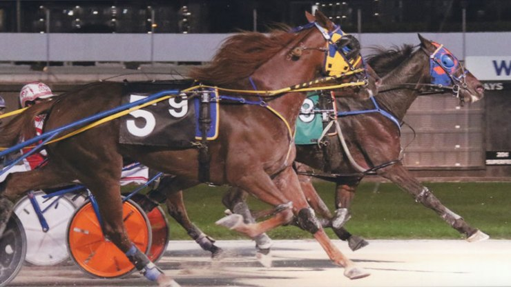 Giant Muscles (blue/orange blinkers) winning a race at Pompano Park on October 23, 2018