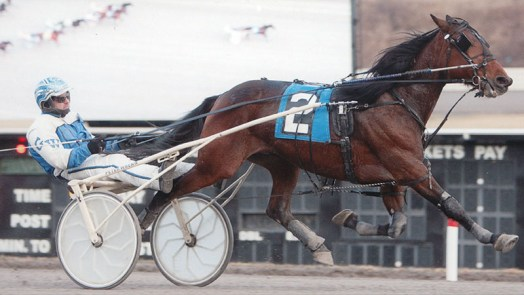 Green Peace winning a race at The Meadows on January 1, 2014.  Trained by Ernie Danks Jr. and owned by Ernie Danks Jr. and Ivar Hyngstrom
