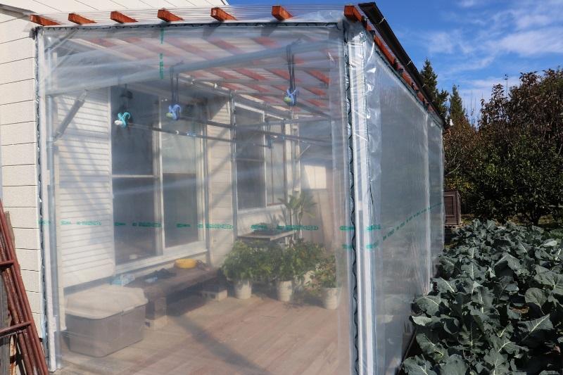 greenhouse_IMG_3121 (800x533)