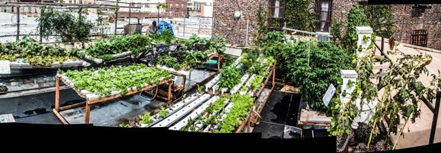 A view of the rooftop hydroponic farm at the Bushwick Starr Theater. (via artsinbushwick.org)