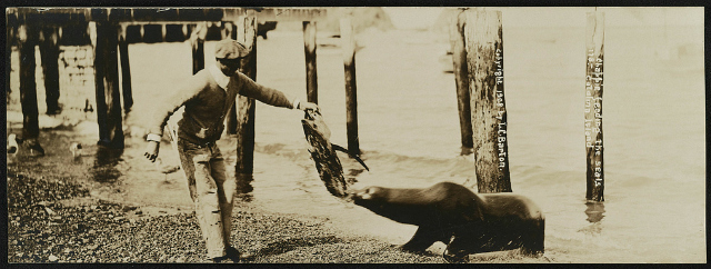 Chappie feeding the seals, Catalina Island / Lester Clement Barton. Creator(s): Barton, Lester Clement, 1884-1918, photographer Date Created/Published: 1908.