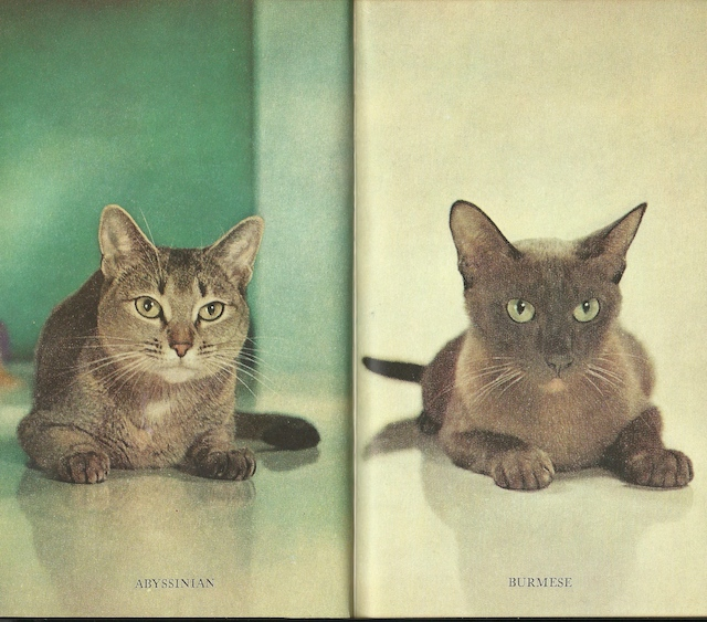 Cat portraits by Walter Chandoha from The Common Sense Book of Kitten and Cat Care