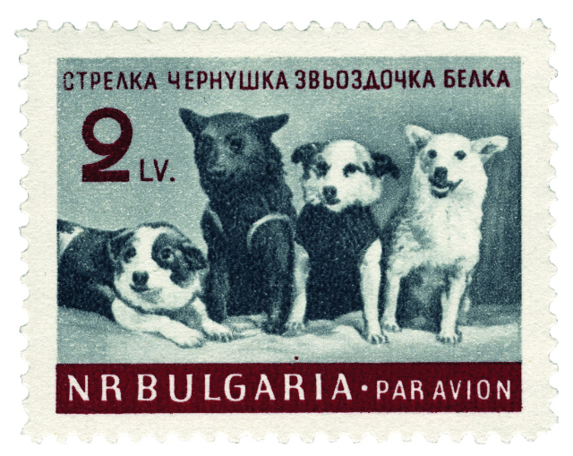 BULGARIAN STAMP Stamp, Bulgarian SSR (1961) This stamp shows a group portrait taken at the press conference held on 28 March 1961. Text left to right reads 'Strelka, Chernushka,  Zvezdochka, Belka'.
