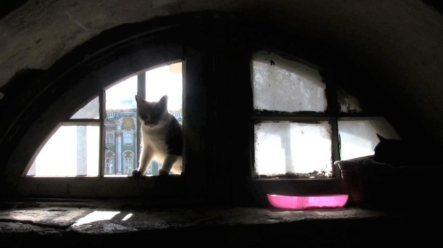 """Sill from Anna Jermolaewa, """"Untitled (Hermitage Cats)"""" (2013)"""