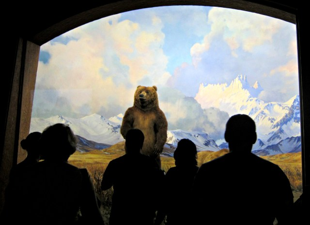Viewing a grizzly bear at the American Museum of Natural History in New York (photo by the author for Hyperallergic)