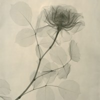 THE PHOTOGRAPHY OF DR. DAIN L. TASKER