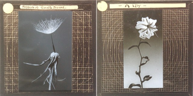 Flower studies from the Royal Albert Memorial Museum Collection (© 2014 Royal Albert Memorial Museum and Art Gallery, Exeter)