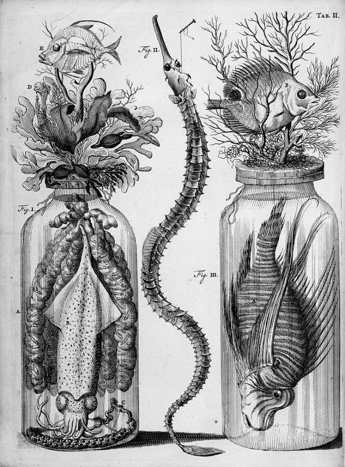 Engraving from Frederik Ruysch's 'Thesaurus Anatomicus,' showing botanical and zoological preparations (via Wellcome Images/Wikimedia)