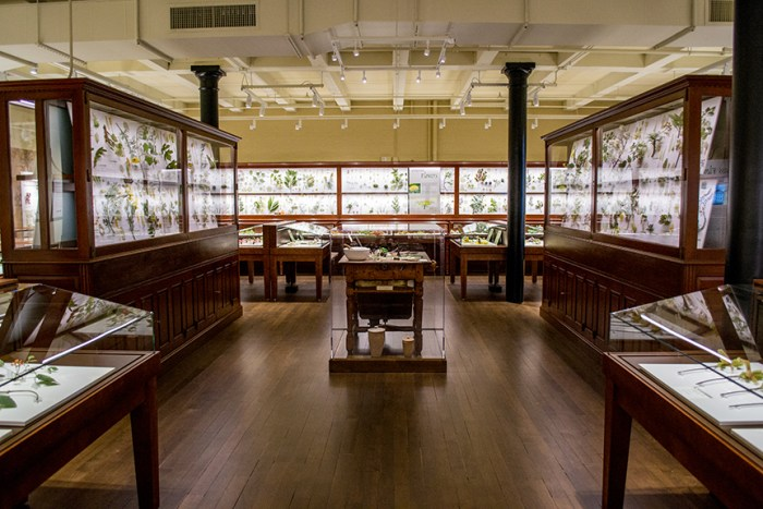 The Glass Flowers gallery at the Harvard Museum of Natural History (courtesy Harvard University)