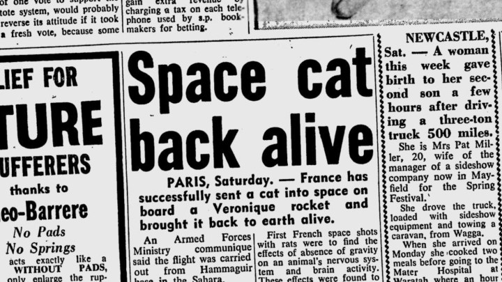 """Space cat back alive,"" <em srcset="