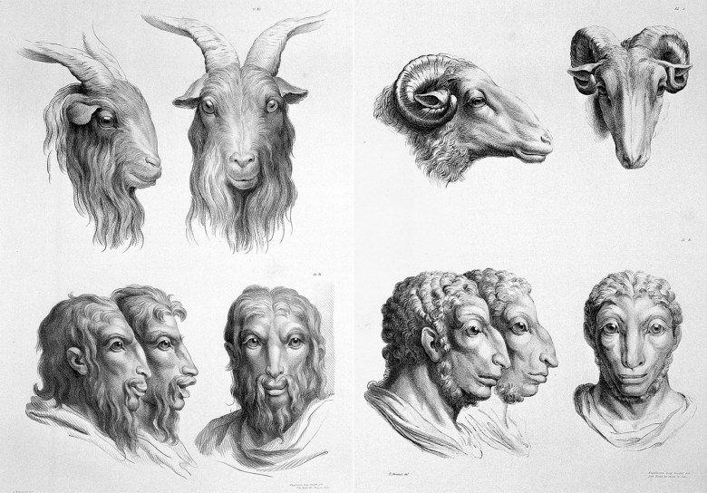 Lithographic drawings illustrative of the relation between the human physiognomy and that of the brute creation, from designs by Charles Le Brun (via Wellcome Images/Wikimedia)