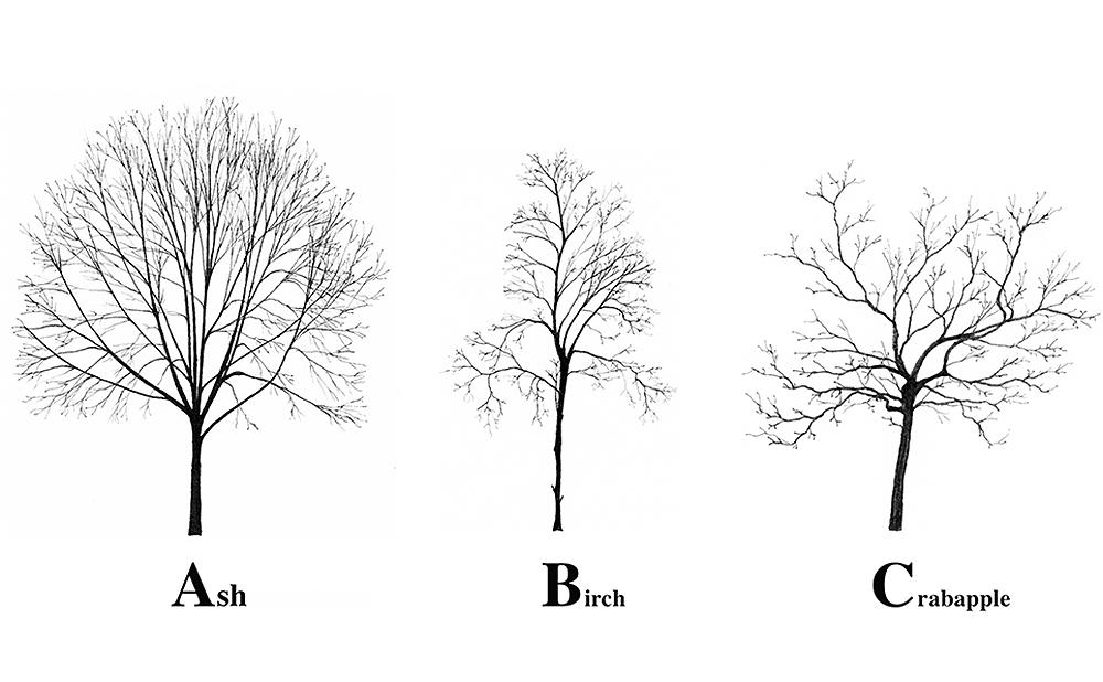 An Alphabet Made of New York City Trees