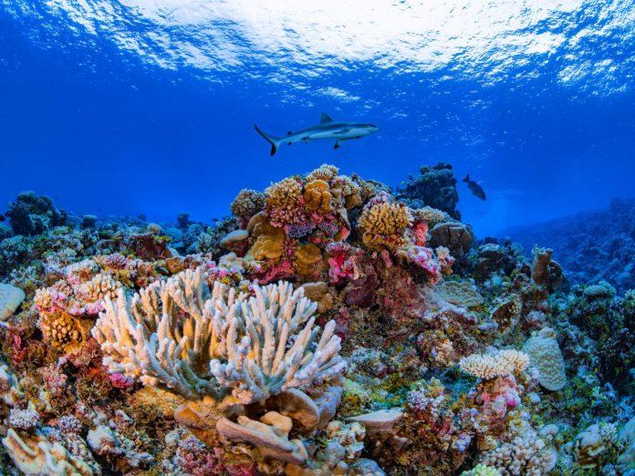 Ailinginae Atoll