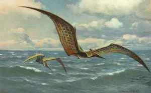 pterodattilo04