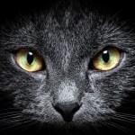 Al cospetto dei grandi antichi: H. P. Lovecraft, Il libro dei gatti