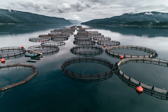 ai applied to aquaculture aims for improved efficiency healthier fish hyperedge embed image