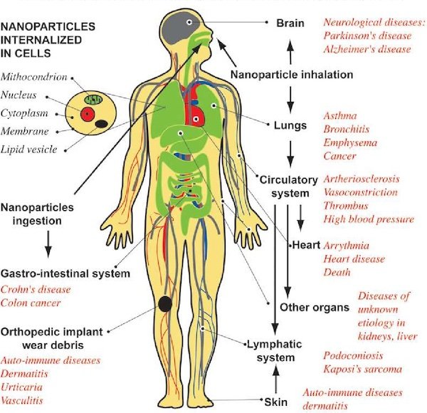 Diagram showingthe displacement of nanoparticles within the body and the possible effects.
