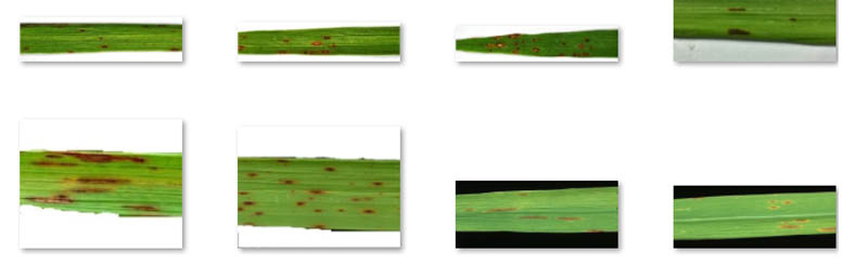 use computer vision to detect crop disease through image analysis with amazon rekognition custom labels 3 hyperedge embed