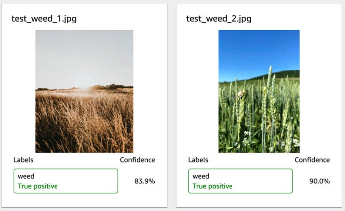 automate weed detection in farm crops using amazon rekognition custom labels 7 hyperedge embed image