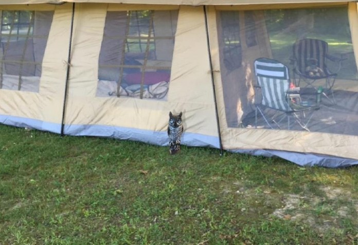 this disguised campsite security system lets you know hoos there hyperedge embed image