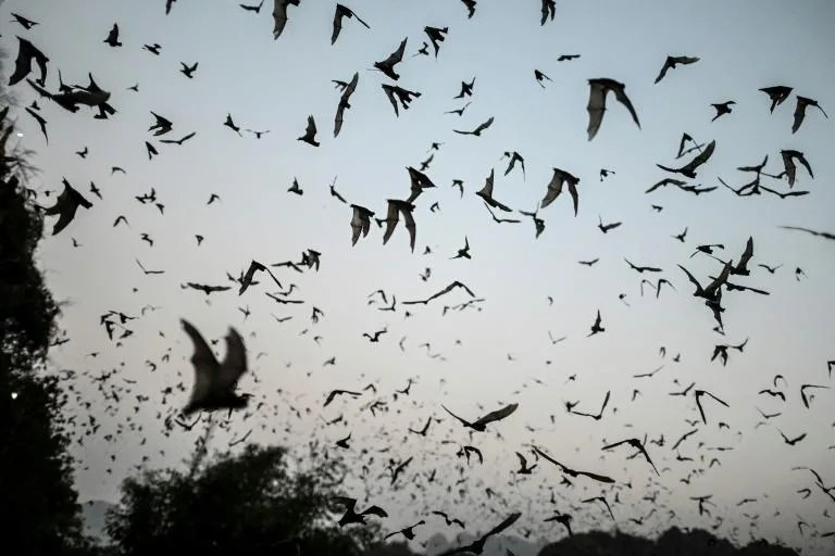 bats with covid like viruses found in laos study hyperedge embed