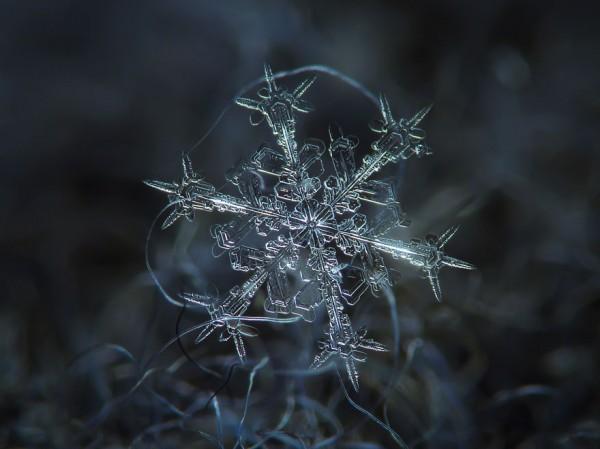 macro-photography-snowflakes-alexey-kljatov-2