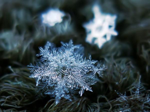macro-photography-snowflakes-alexey-kljatov-9