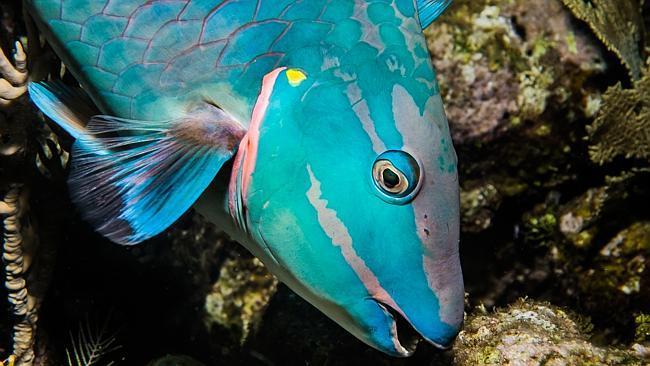 Resultado de imagem para peixes exoticos lindos