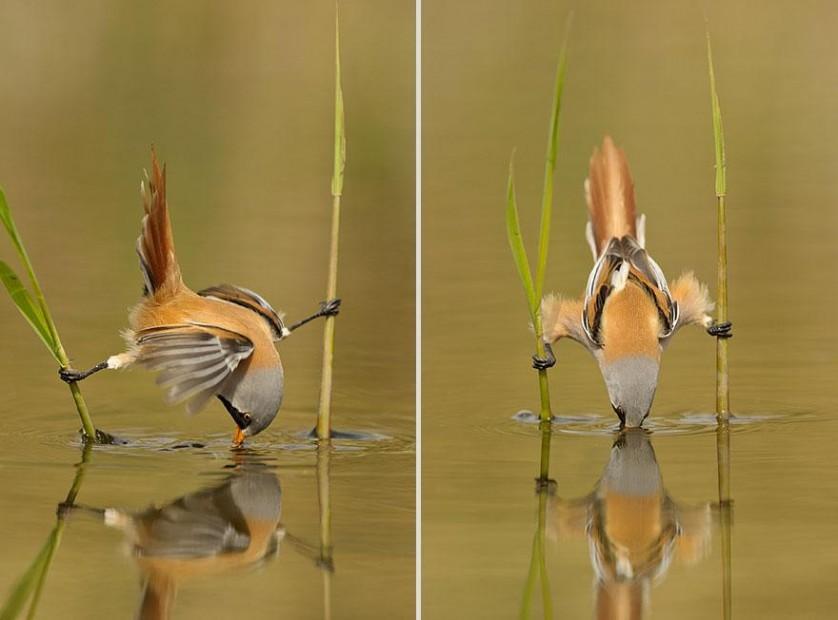 cute-animal-photography-edwin-kats-6