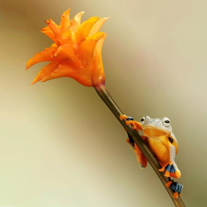 macro-frogs-wil-mijer-12
