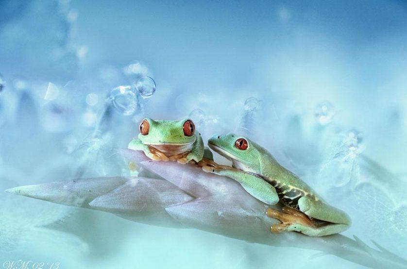macro-frogs-wil-mijer-7