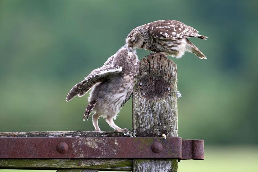 foto de animais se beijando corujas