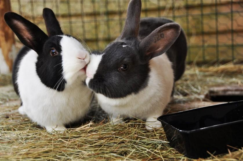 fotos de animais se beijando coelhos