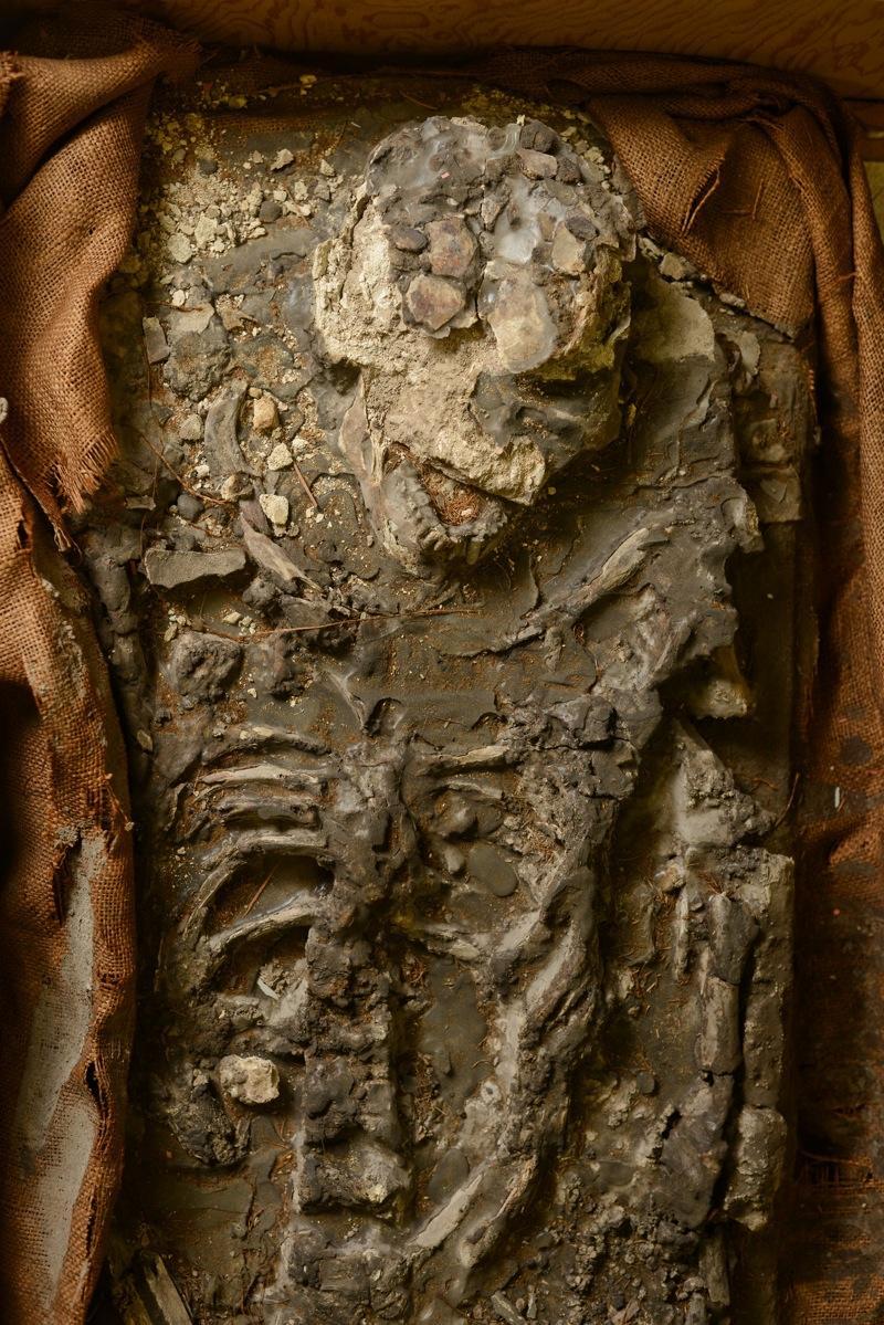 esqueleto de noe 4