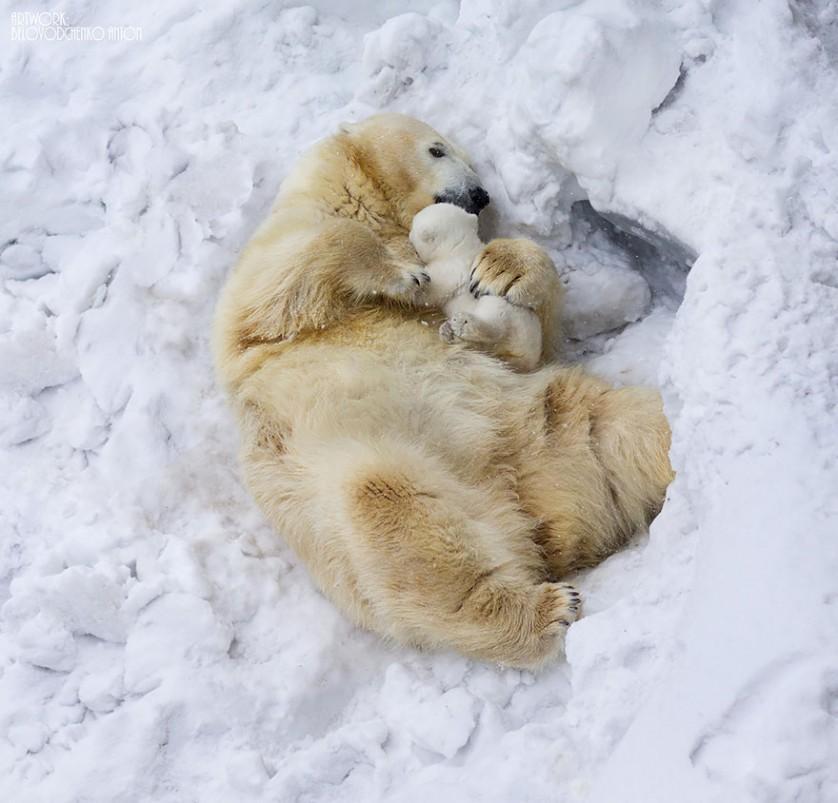 filhotes de ursos 10