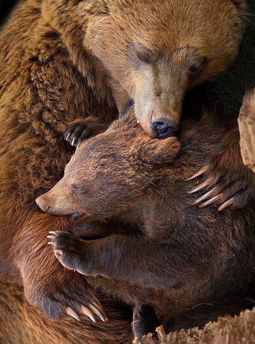 filhotes de ursos 6