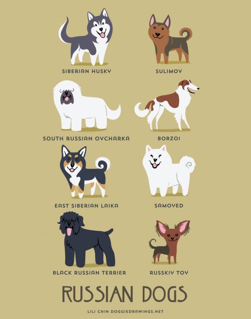Husky siberiano, Sulimov, Pastor-do-cáucaso, Borzoi, Laika da Sibéria Oriental, Samoieda, Terrier preto da Rússia e Pequeno cão russo são raças RUSSAS