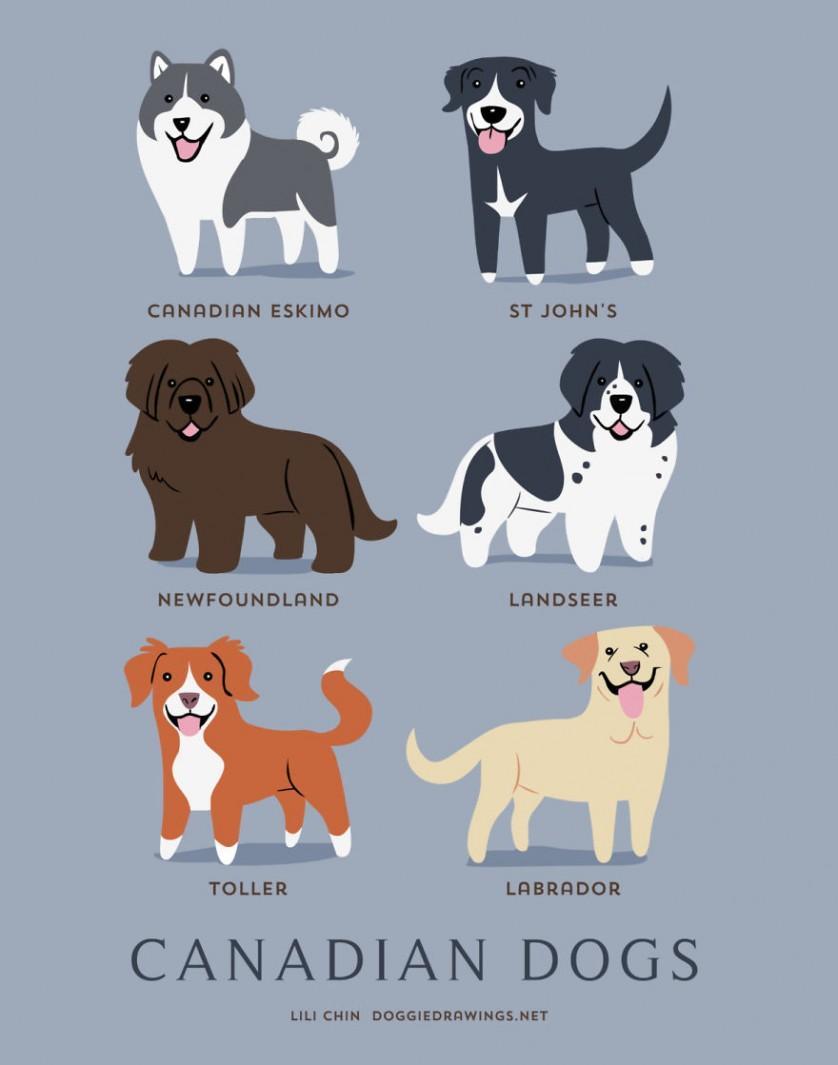 Esquimó canadense, Labrador de St John's, Terra-nova, Landseer, Toller e Labrador retriever são raças CANADENSES