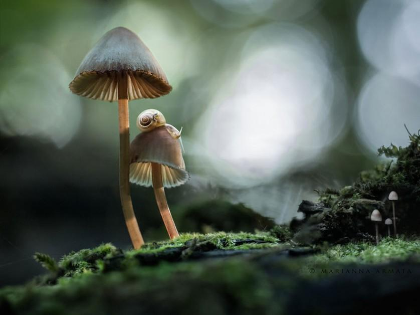 foto Mushrooms With A Snail