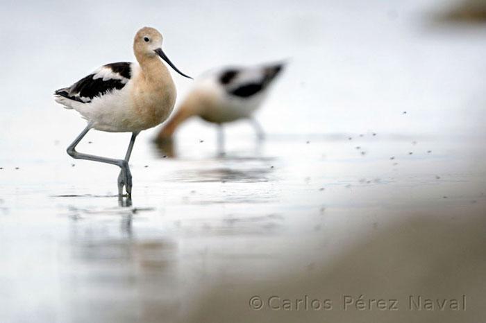 fotografo de vida selvagem carlos perez naval (13)