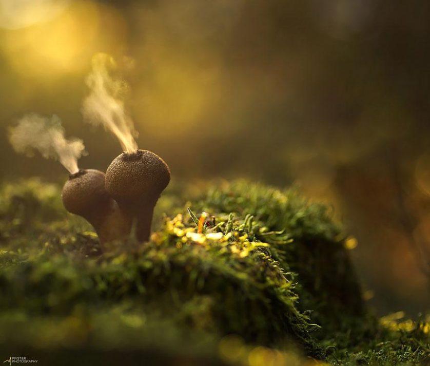 fotos de cogumelos