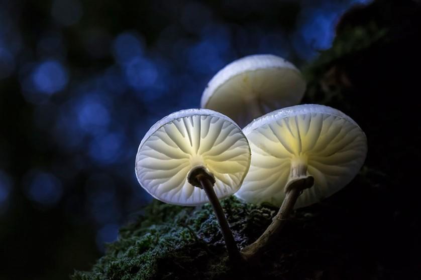 mushroom-photography-292__880