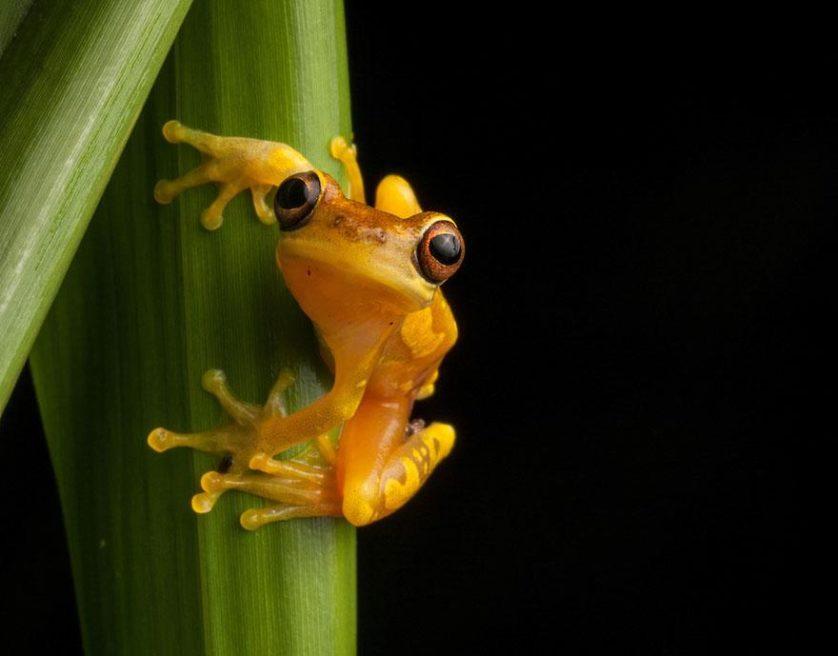 sapos anfibios raros 3-