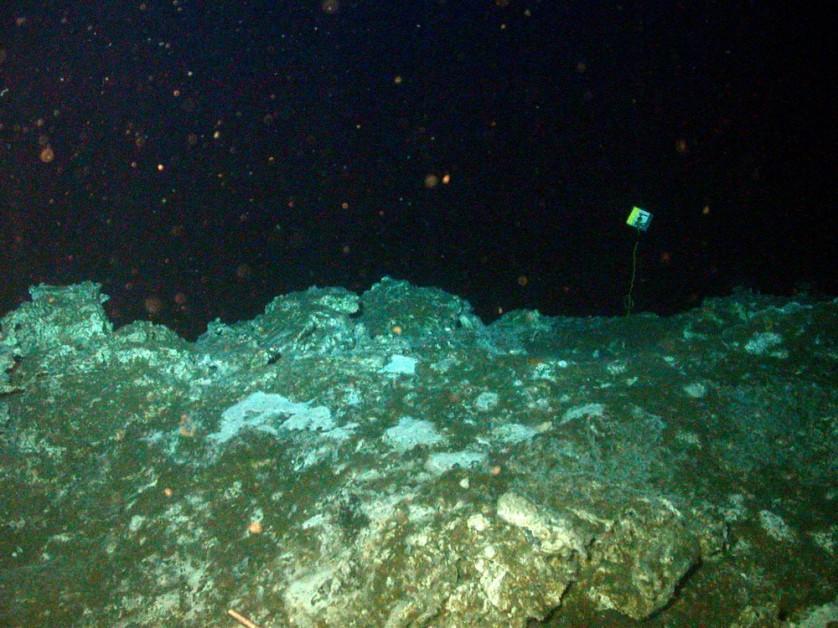 rocce vita oceado sfondo 2