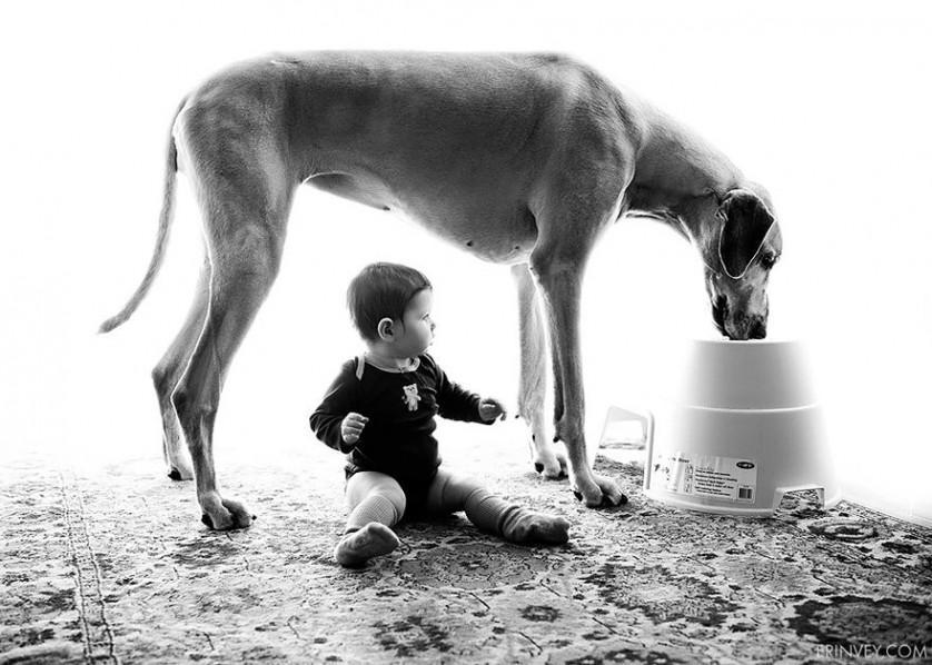 bebes e cachorros (11)