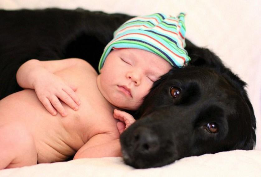 bebes e cachorros (29)