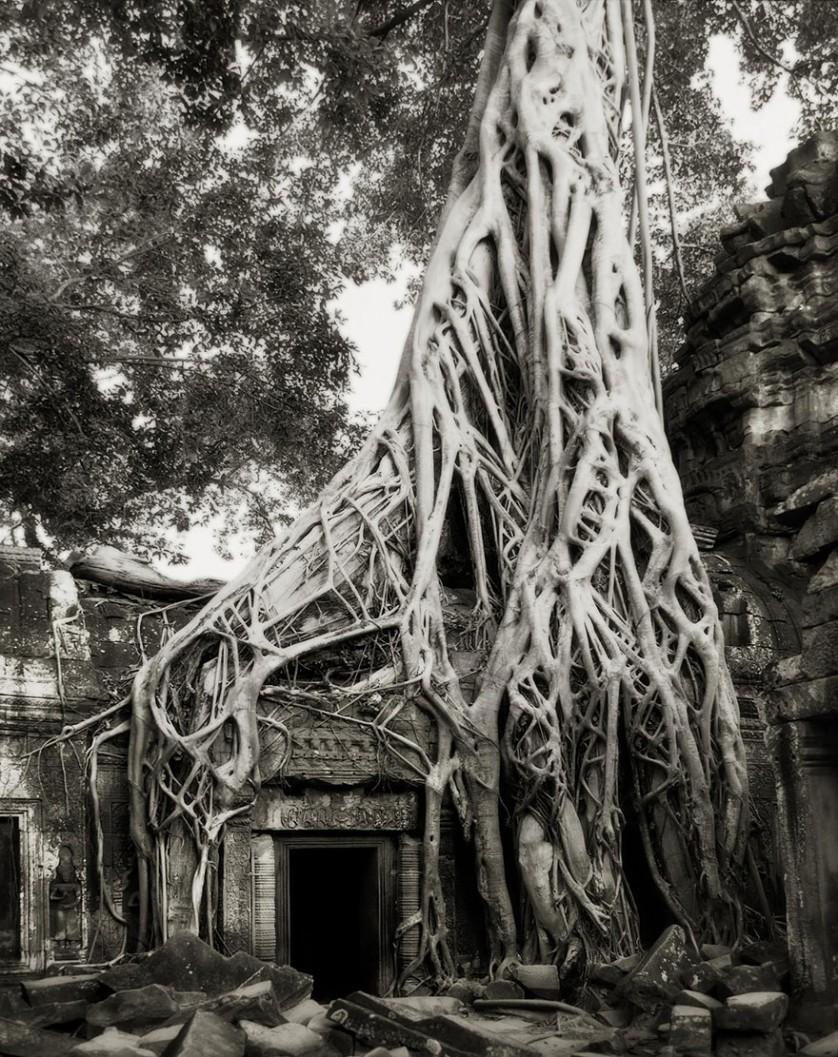 vecchi alberi 4