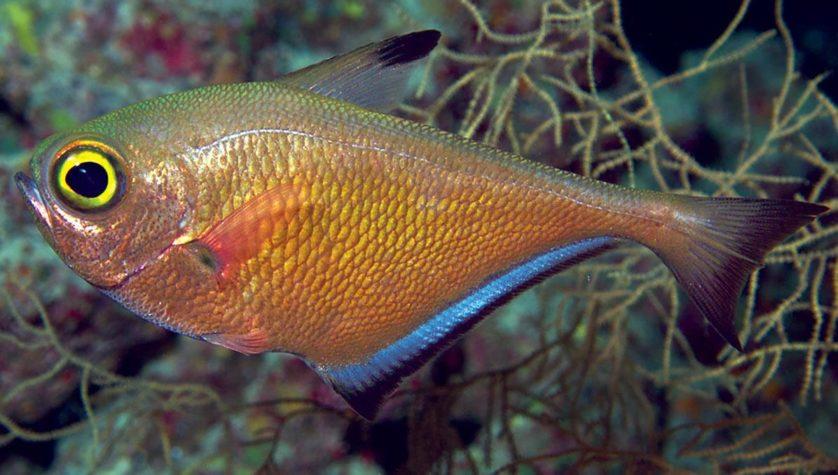 especies descobertas em 2014 10