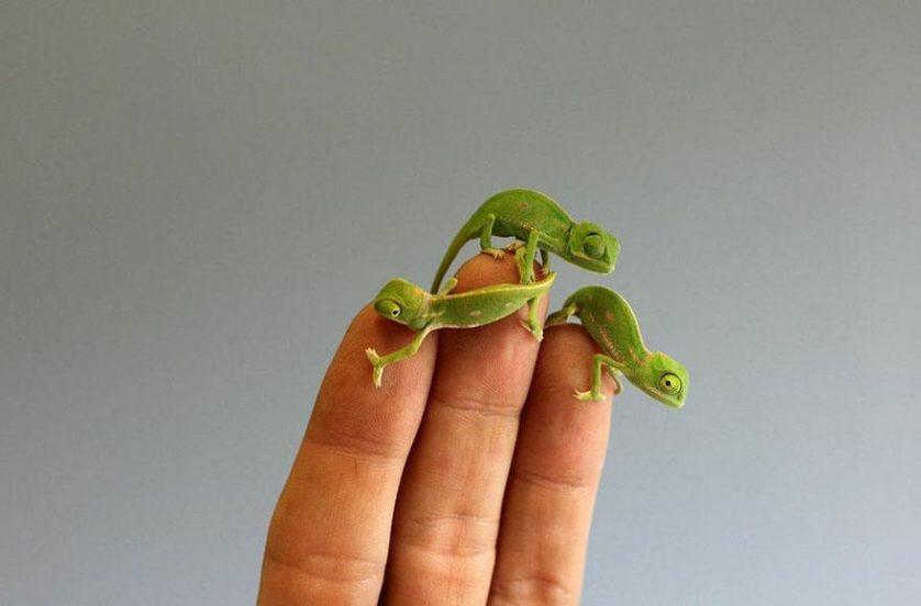 Beverage Chameleons (8)